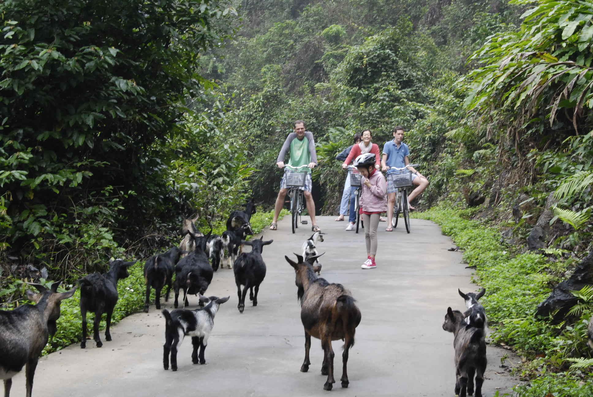Cat Ba Island - Cat Bat National park
