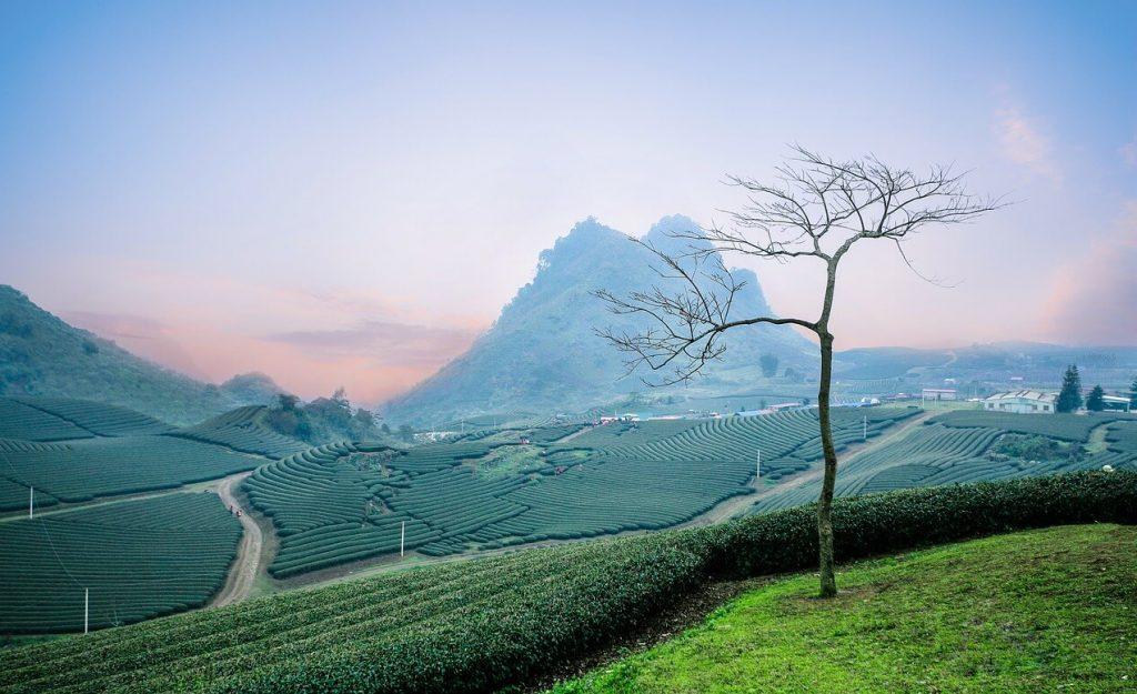 moc chau vietnam tea hills