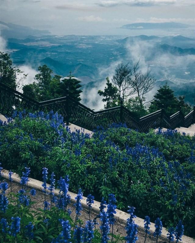 Bana Hills - Lavender Garden