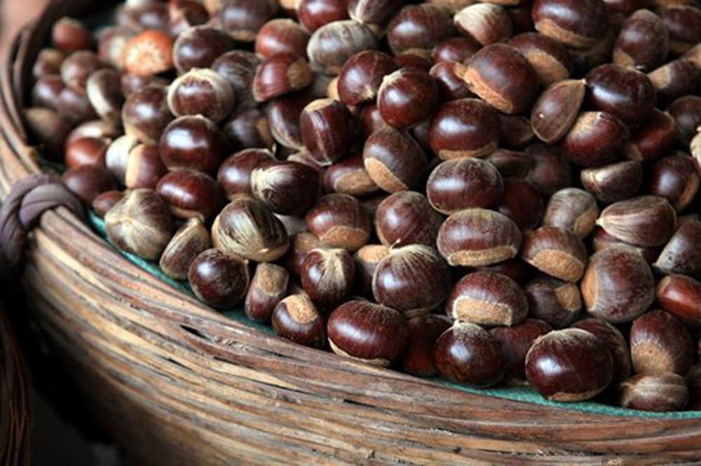 trung khanh chestnut
